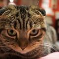 Photos: たれ耳猫の目力