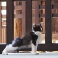 お寺の子猫1