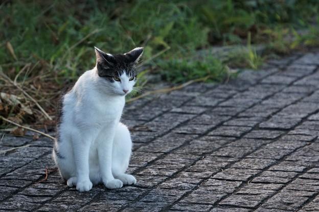 Photos: キリッとした猫1
