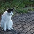 写真: キリッとした猫1