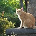 写真: 流し目猫