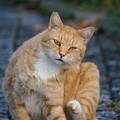 怪訝そうな猫