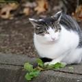 写真: 道端の猫1