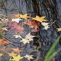 写真: 水上の落ち葉