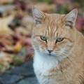 写真: 秋の猫