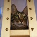 枠にはまる猫