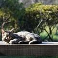 ベンチ上の猫