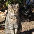 眩しい猫たち