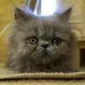 もふもふ子猫1