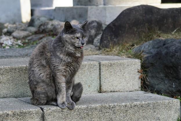 舌しまい忘れ猫1