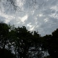 写真: 2017年4月9日 西公園 桜 福岡 さくら 写真 (40)