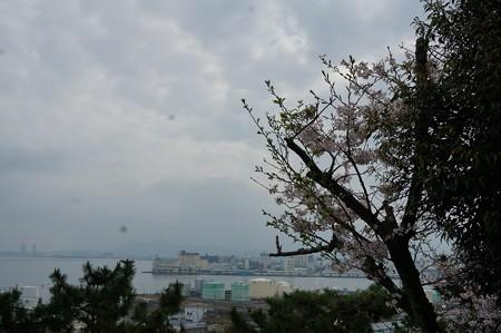 2017年4月9日 西公園 桜 福岡 さくら 写真 (45)