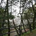 写真: 2017年4月9日 西公園 桜 福岡 さくら 写真 (84)