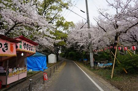 2017年4月9日 西公園 桜 福岡 さくら 写真 (96)