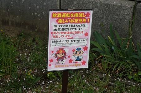 2017年4月9日 西公園 桜 福岡 さくら 写真 (112)