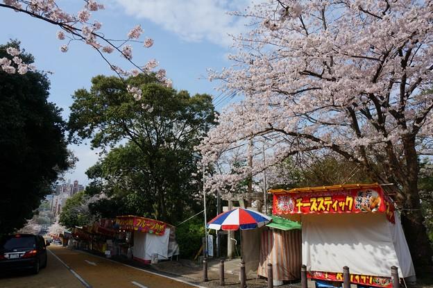 2017年4月9日 西公園 桜 福岡 さくら 写真 (132)