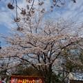 Photos: 2017年4月9日 西公園 桜 福岡 さくら 写真 (133)