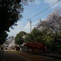 写真: 2017年4月9日 西公園 桜 福岡 さくら 写真 (135)