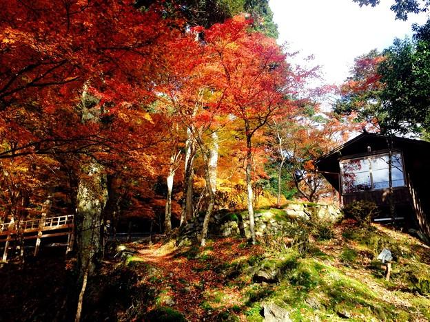 2016秋 高雄山 神護寺