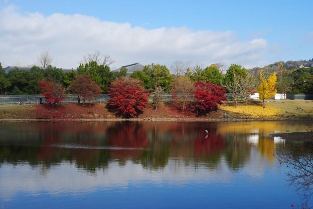 2016秋 奈良公園