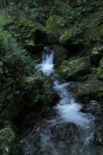 京都・愛宕山30