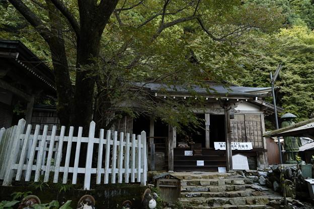 京都・愛宕山24