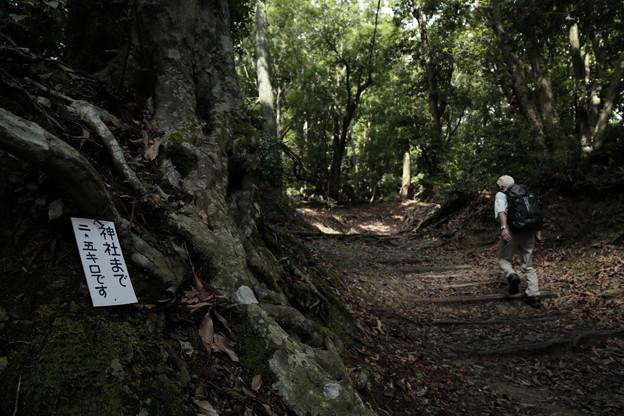 京都・愛宕山08