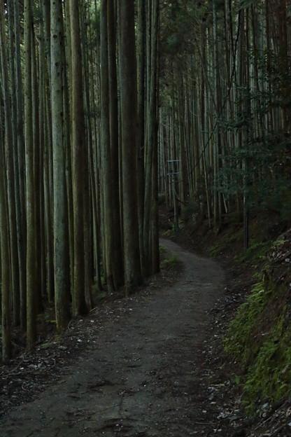 京都・愛宕山31