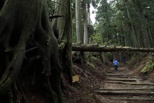 京都・愛宕山11