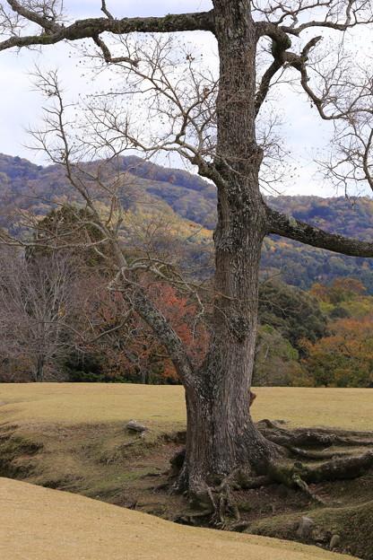 奈良公園05