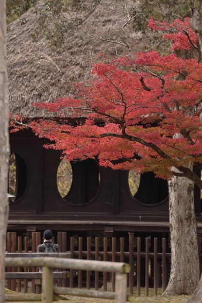 奈良公園04