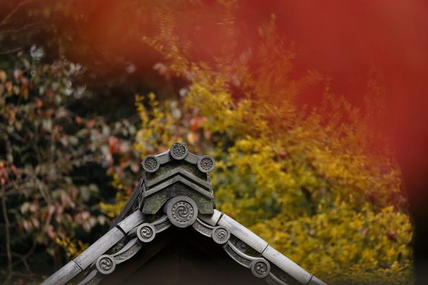 下鴨神社10