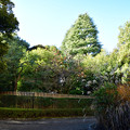 殿ヶ谷戸庭園_003