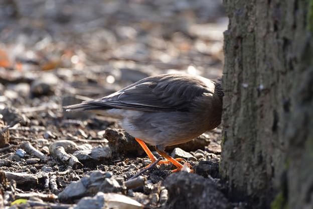 鳥_488