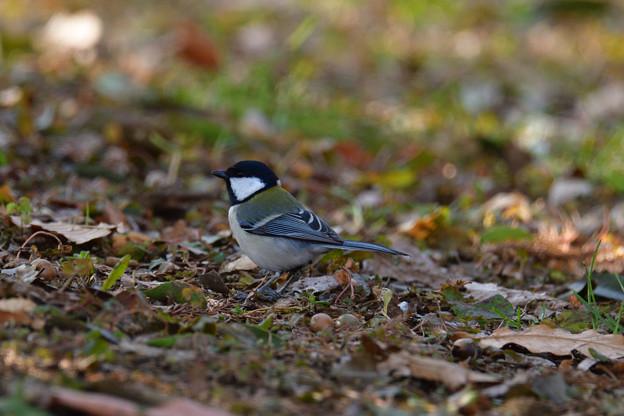 鳥_490