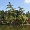 東大寺の鏡池