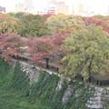写真: 大阪城西の丸庭園の紅葉
