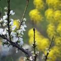Photos: 春