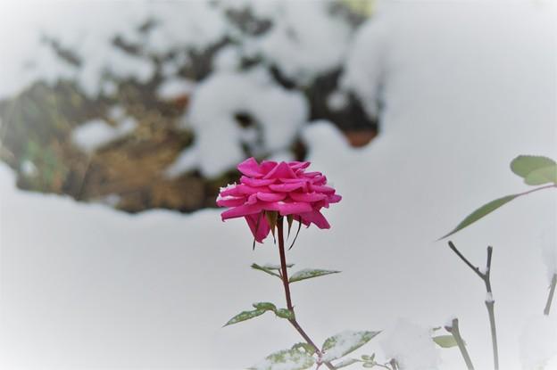 Photos: 春を待ちわびて