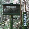 写真: 日本で最初の有料道路