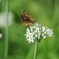 写真: 蝶に挑戦