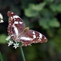 写真: 蝶シリーズ