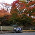 Photos: 白石神社の紅葉