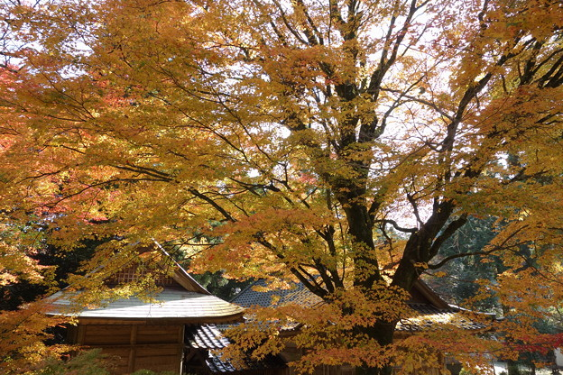 白石神社の紅葉