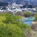 若葉と利根川
