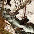 残雪のある渓流8(津奈木沢)