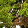 木の実の滝2