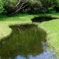 栂池の地塘