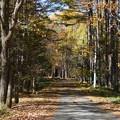 横谷渓谷への紅葉の道