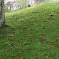 芝生の上の落葉